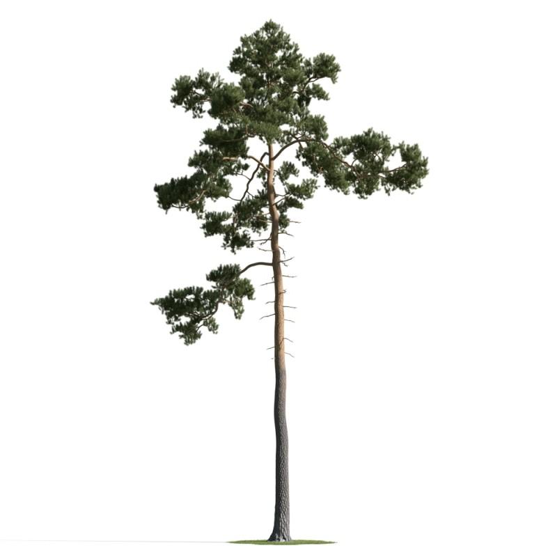 tree 44 AM163 Archmodels