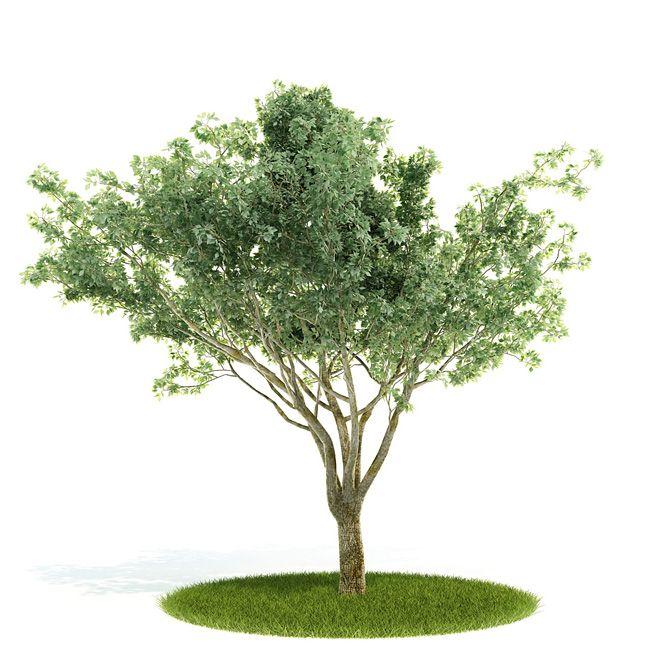 Plant 03 AM52