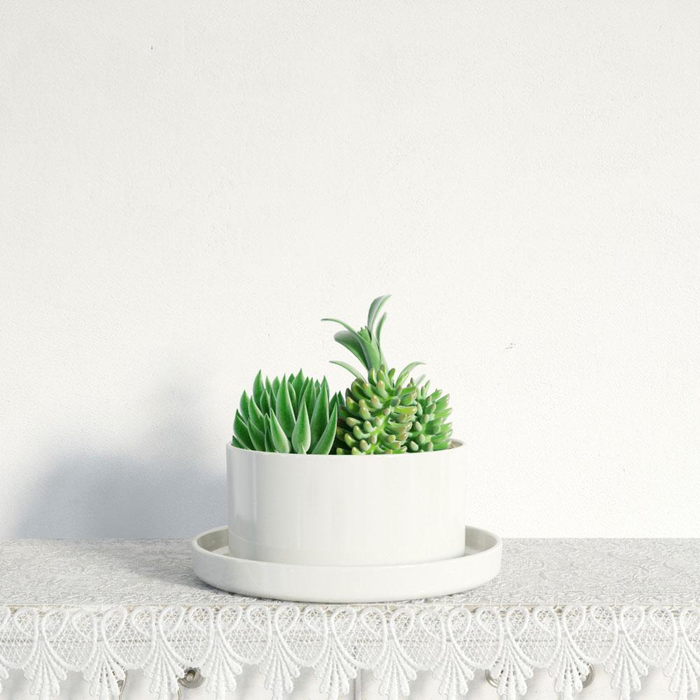 plant 14 AM141 Archmodels