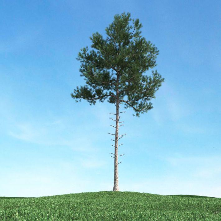 tree 15 AM106 Archmodels