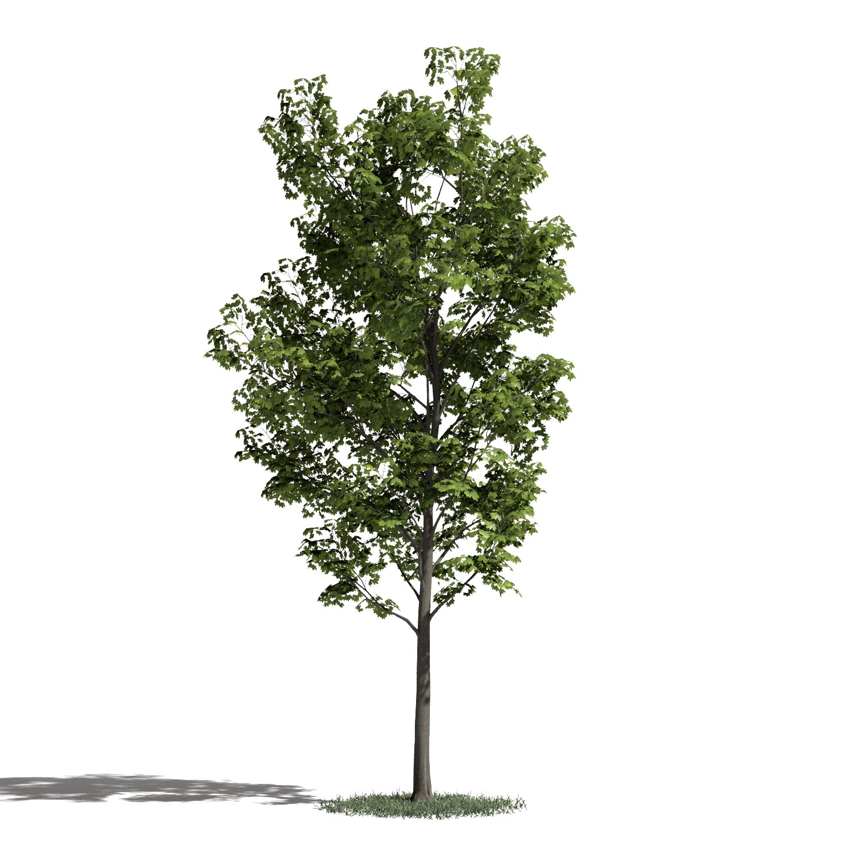 Tree 29 AM1 for Blender Archmodels