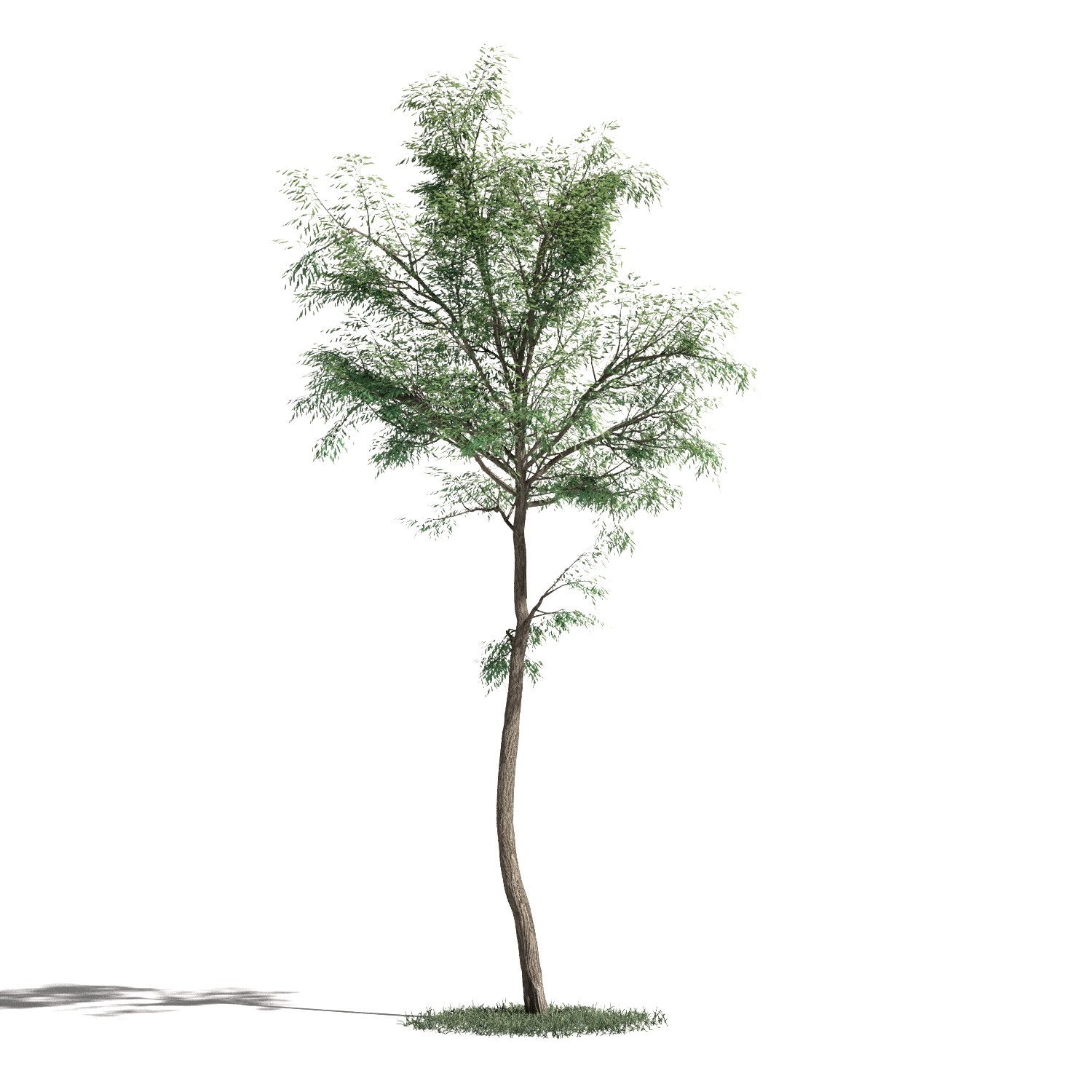 Tree 47 AM1 for Blender Archmodels
