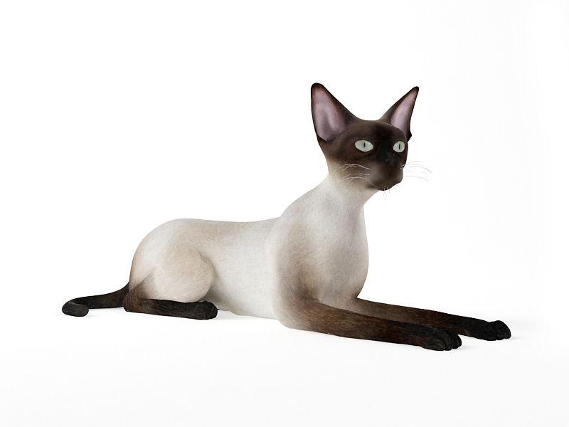 cat 55 AM83 Archmodels