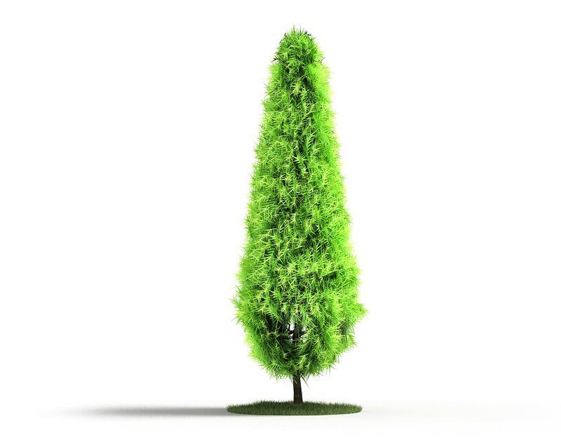 Plant 27 AM04 C4D