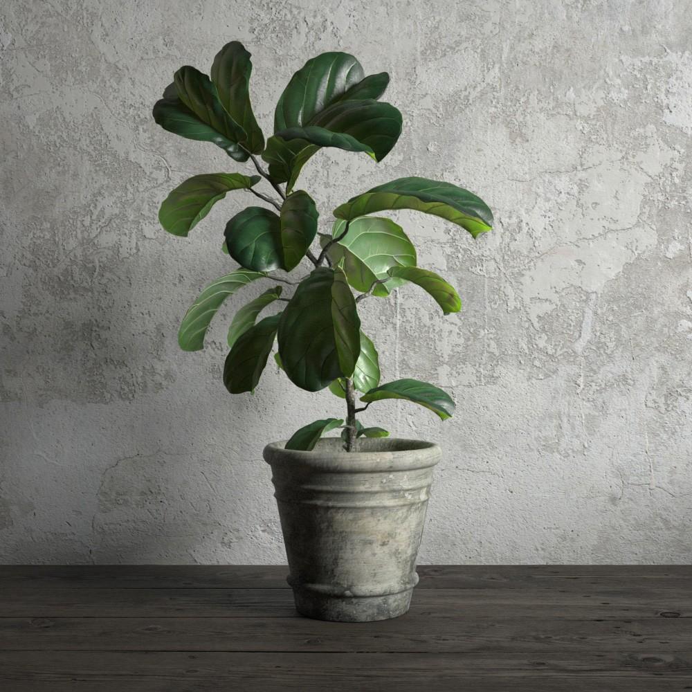 plant 20 AM173 Archmodels