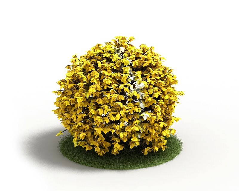 Plant 30 AM4 for Cinema4D Archmodels
