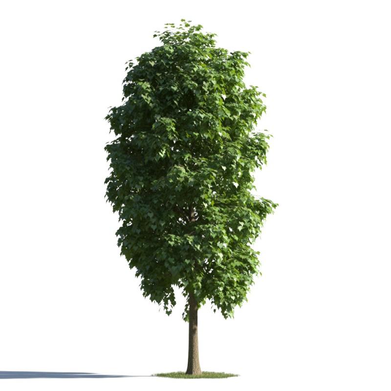 tree 48 AMC1