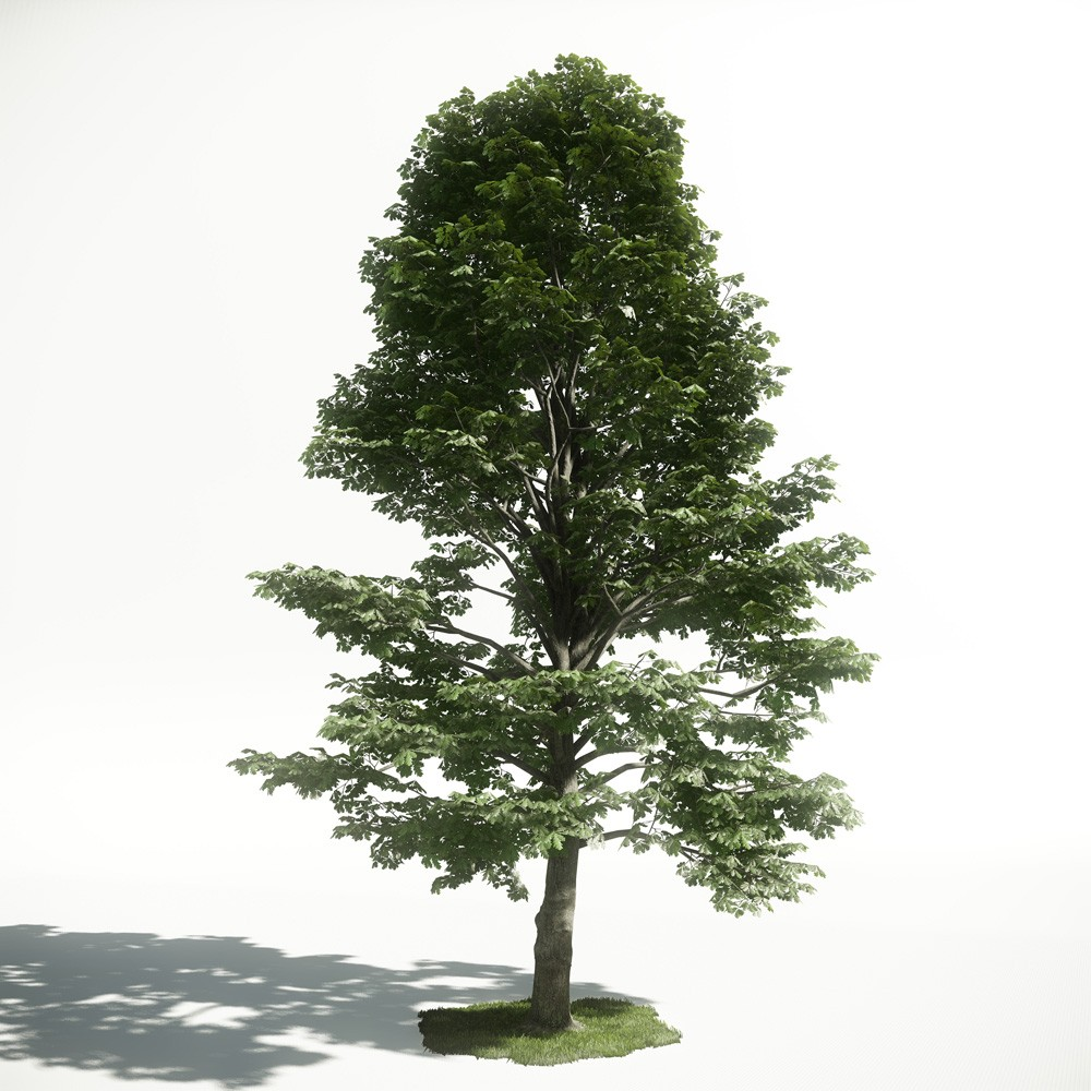 Tree 53 AM1 for CryEngine Archmodels