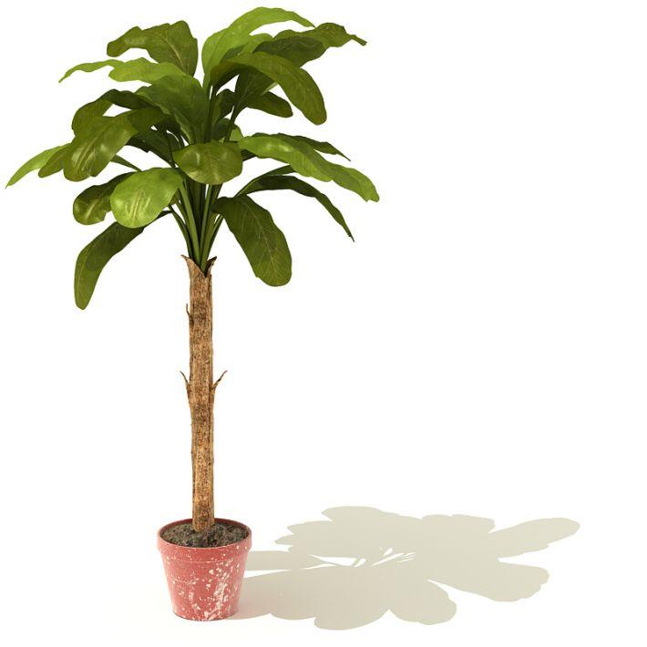 plant 23 AM41