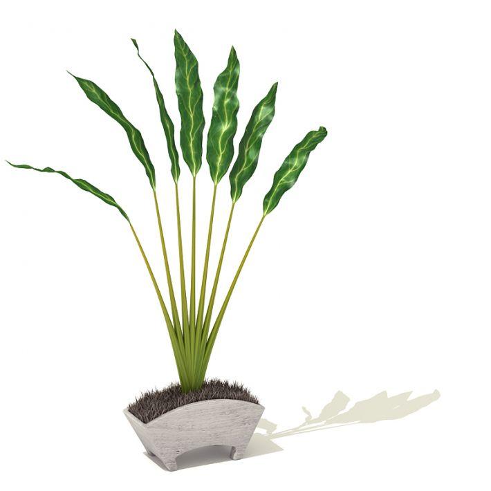 plant 20 AM41 Archmodels