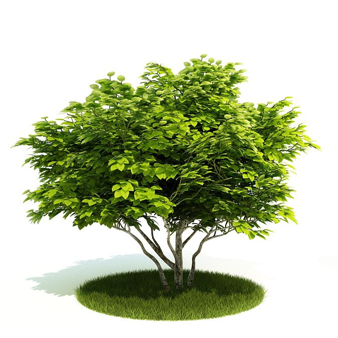 Plant 27 AM52 Archmodels