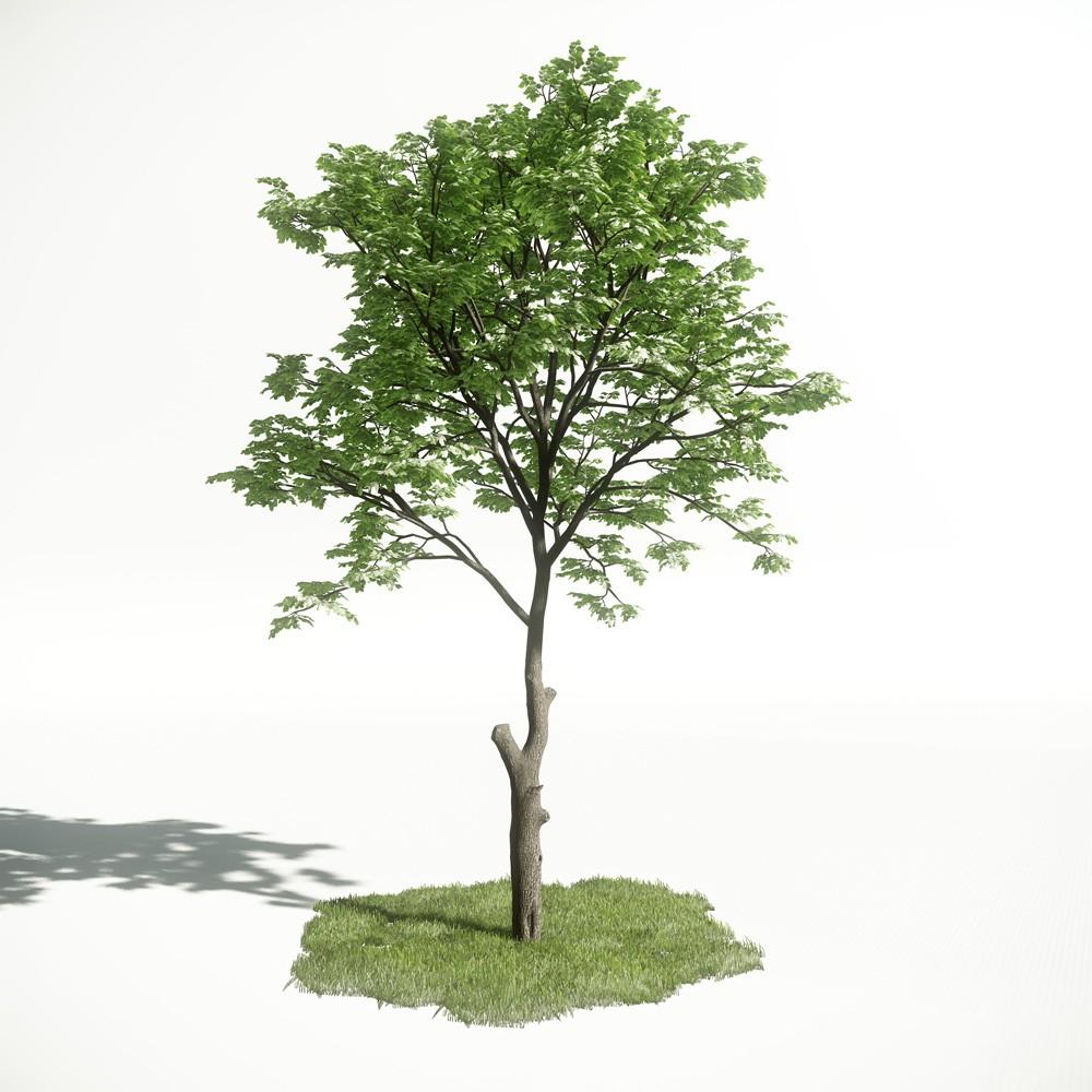 Tree 07 amce1