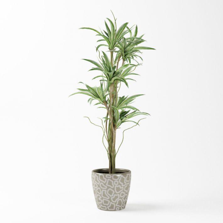 Plant 59 AM75 Archmodels