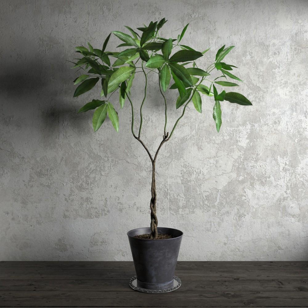plant 25 am173