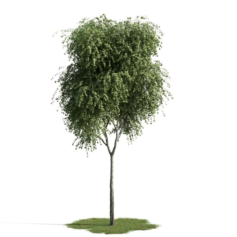 tree 18 AM163 Archmodels