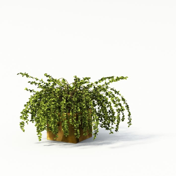 Plant 04 AM24