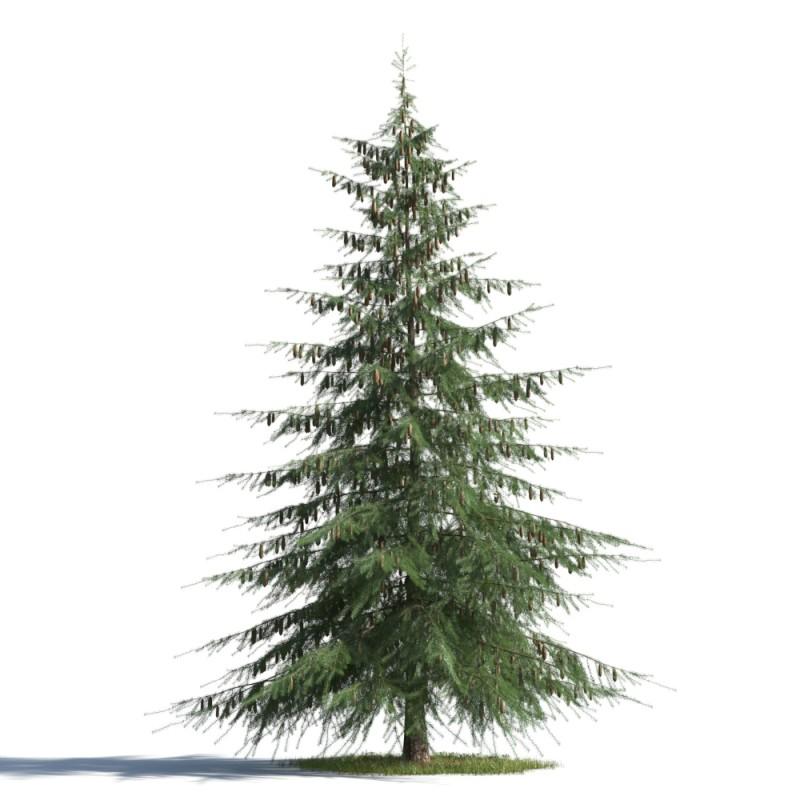 tree 73 AMC01