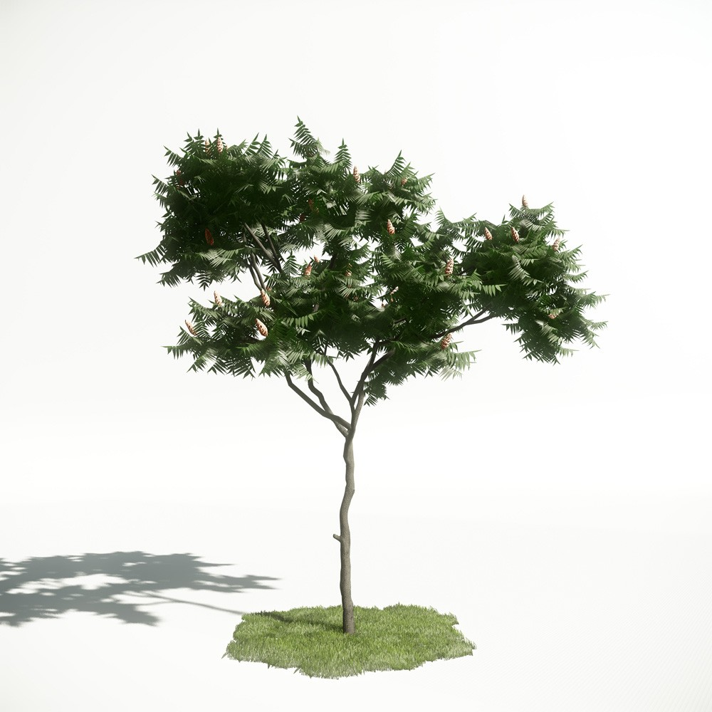 Tree 6 AM1 for CryEngine Archmodels