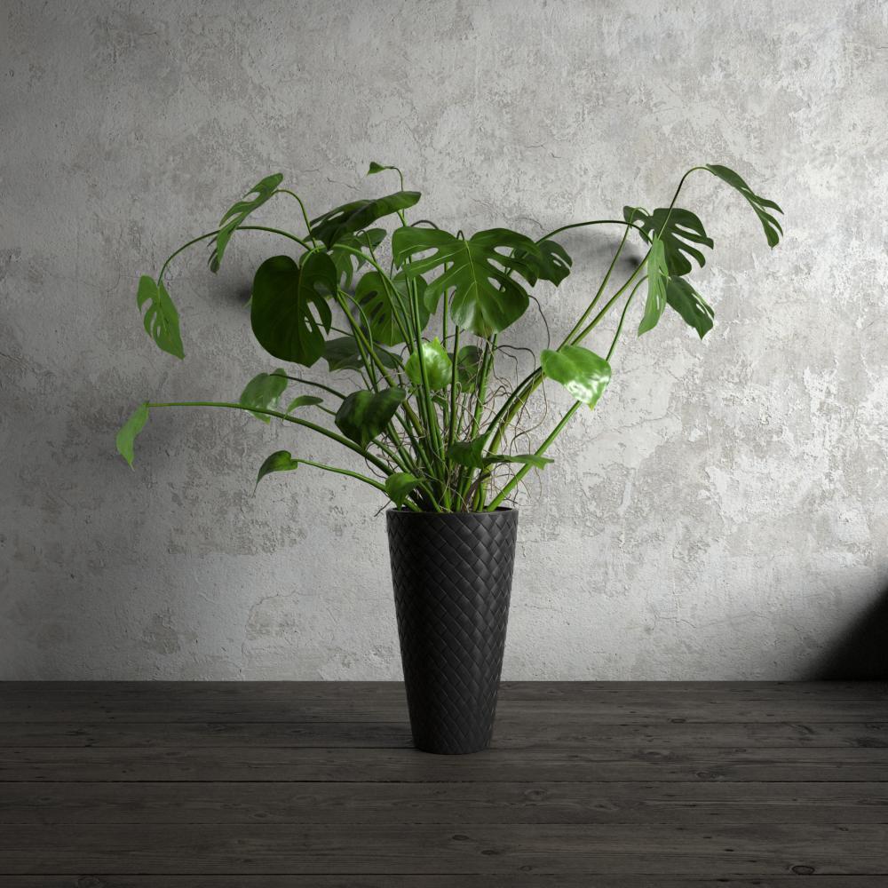 plant 22 am173