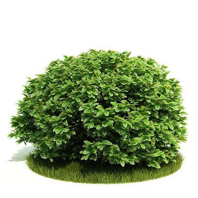 Plant 48 AM52 Archmodels