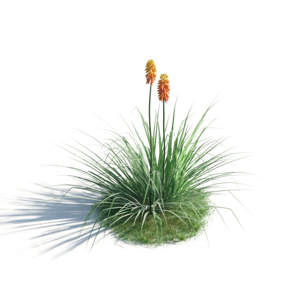 plant 39 AM183