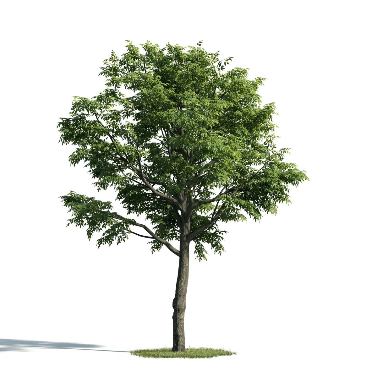 Tree 49 AM171 Archmodels