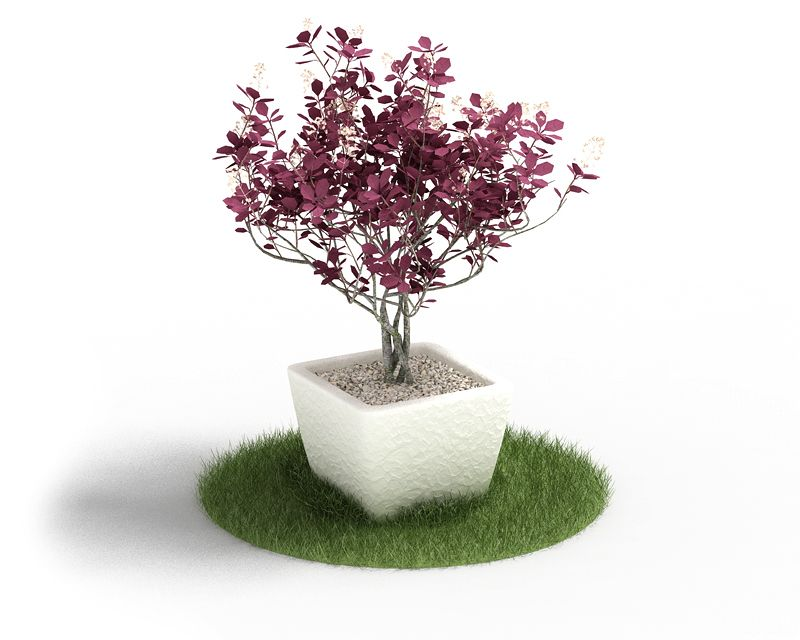 Plant 61 AM4 for Cinema4D Archmodels