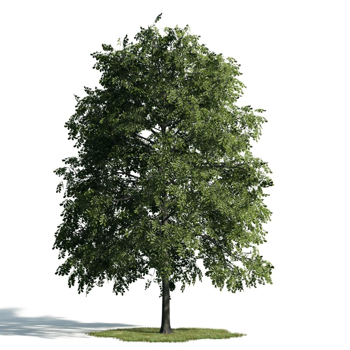 Tree 32 AM171 Archmodels