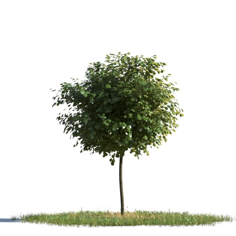 tree 83 AMC01