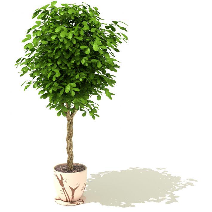 plant 39 AM41 Archmodels