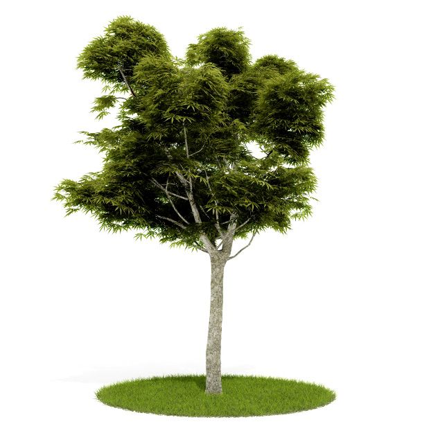 Plant 2 AM52 for Cinema4D Archmodels