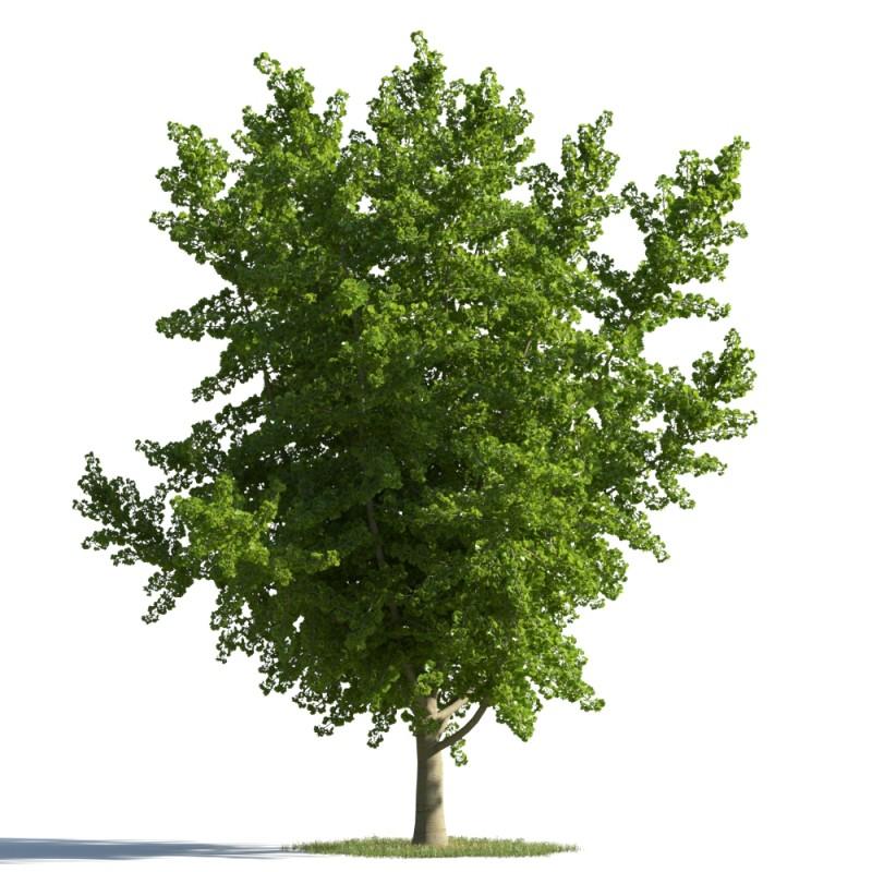 tree 33 AMC01