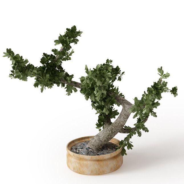 Plant 11 Archmodels vol. 66