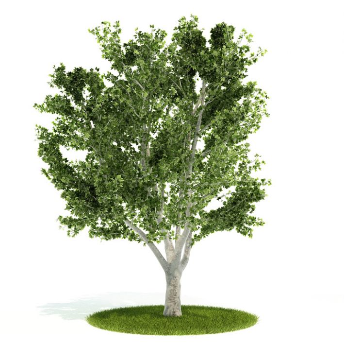 Plant 55 AM52 Archmodels