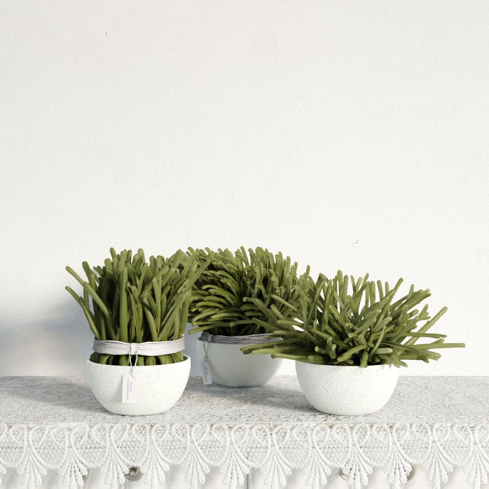 plant 32 am141