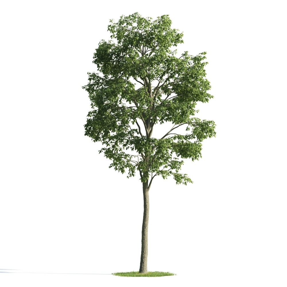 Tree 48 am176