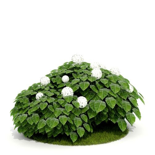 Plant 16 AM52 for Cinema4D Archmodels