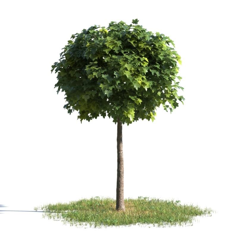 tree 93 AMC01