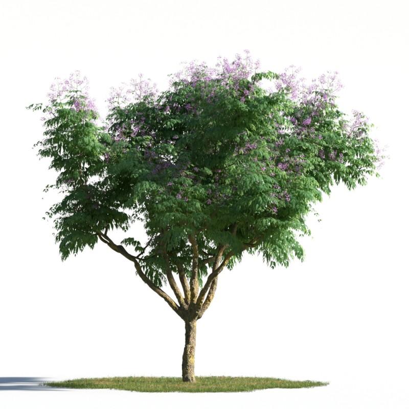 tree 20 AMC1