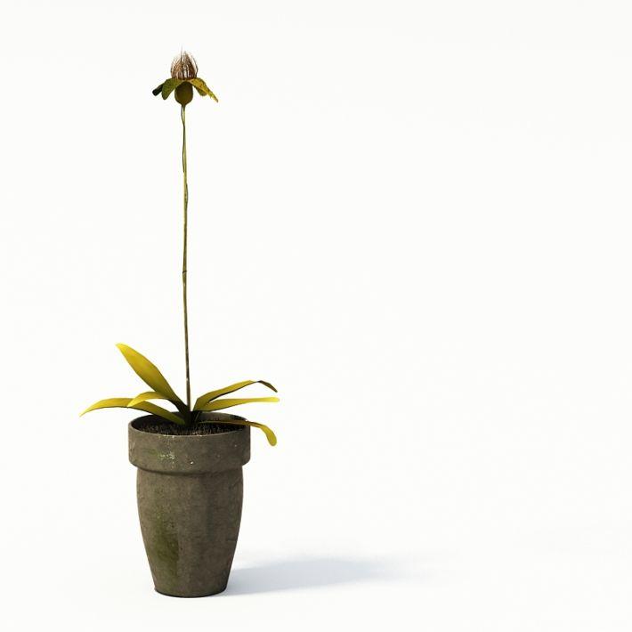 Plant 19 AM24