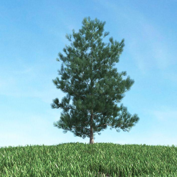 tree 14 AM117 Archmodels
