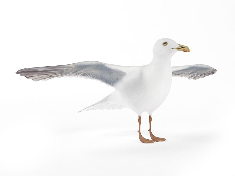 seagull 15 AM83 Archmodels