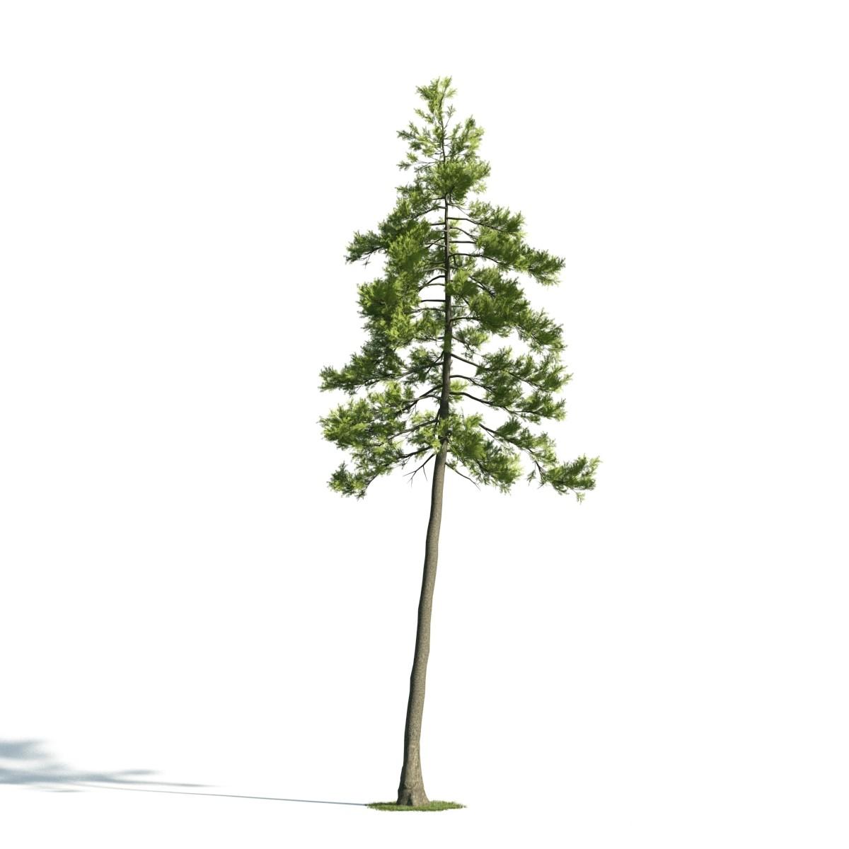 Tree 27 am171
