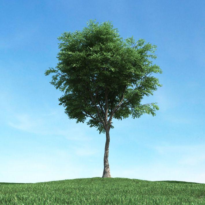tree 40 AM117 Archmodels
