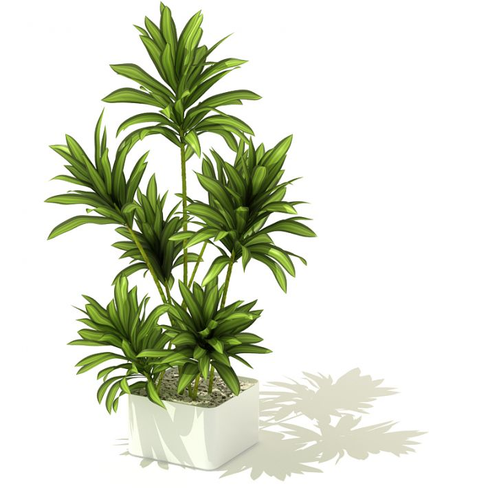 plant 50 AM41 Archmodels