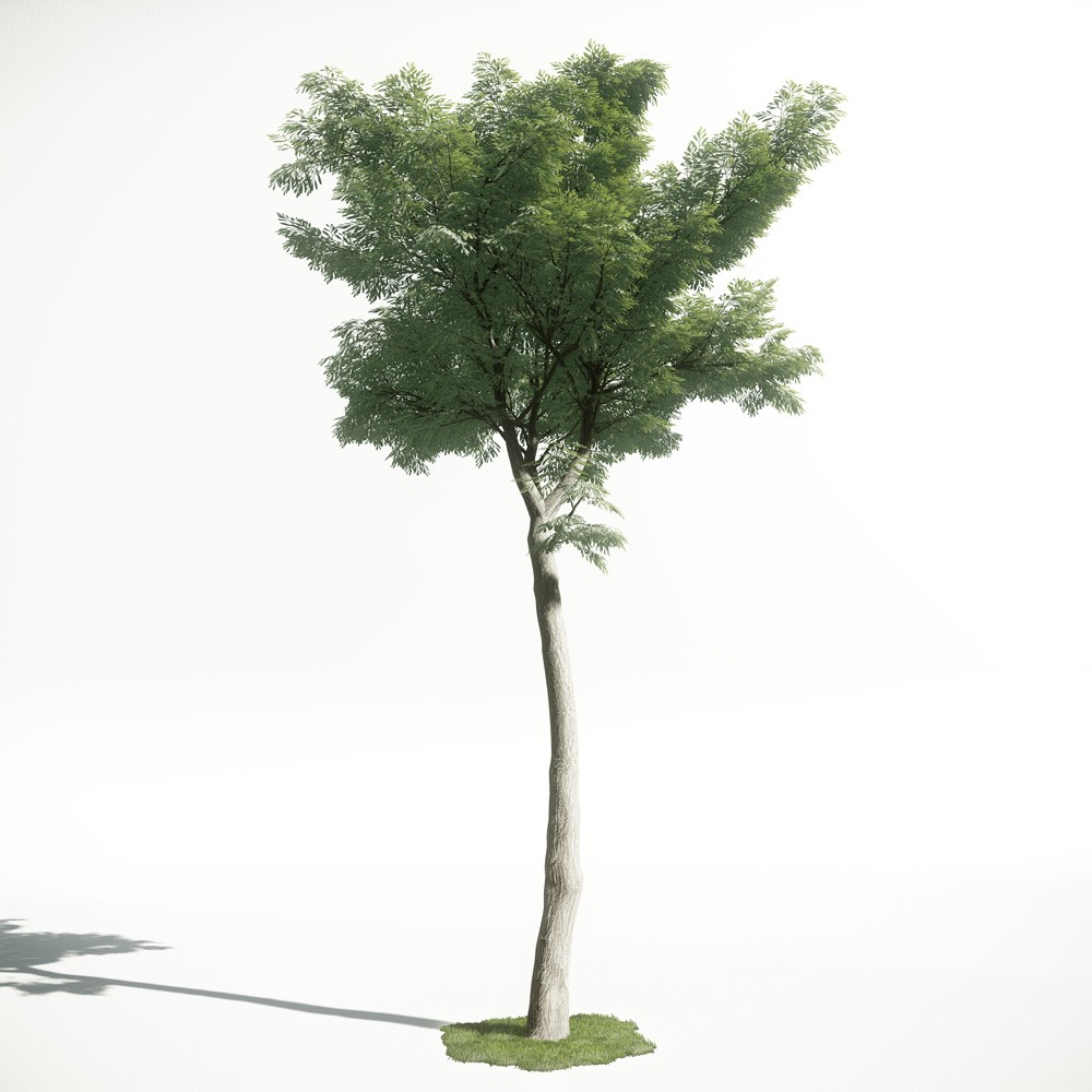 Tree 48 AM1 for CryEngine Archmodels