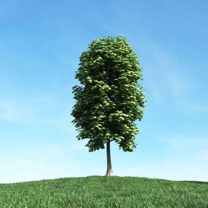 tree 31 AM106 Archmodels