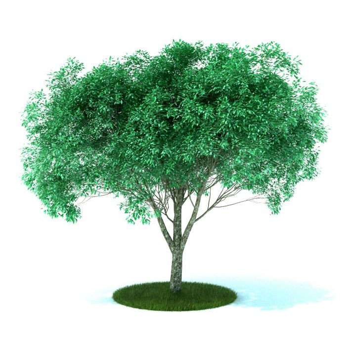 plant 41 AM105 Archmodels