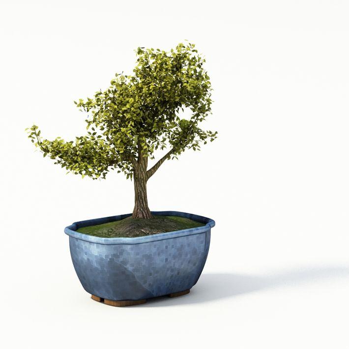 Plant 50 AM24