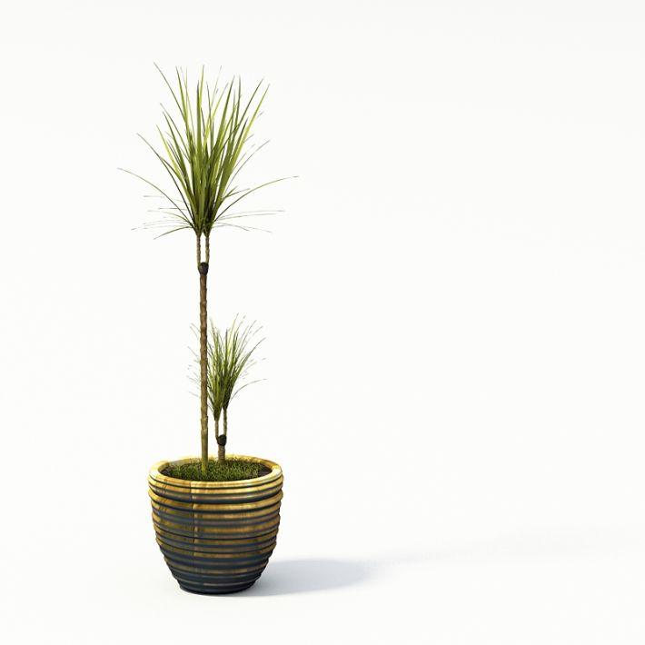 Plant 24 AM24